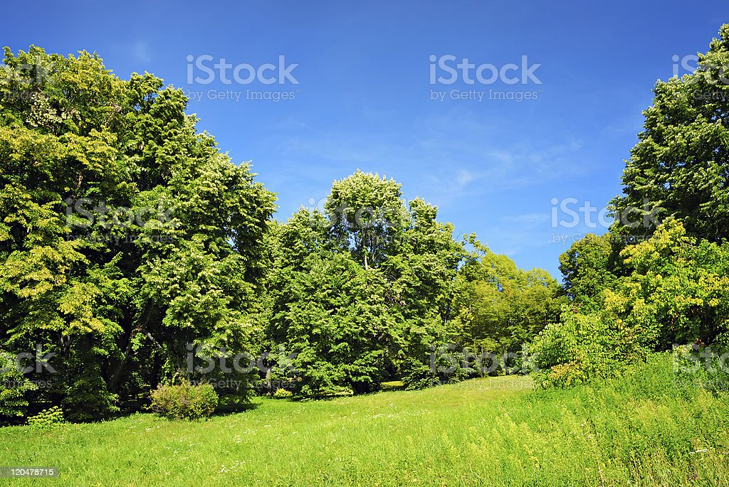 Green trees and blue sky royalty-free stock photo