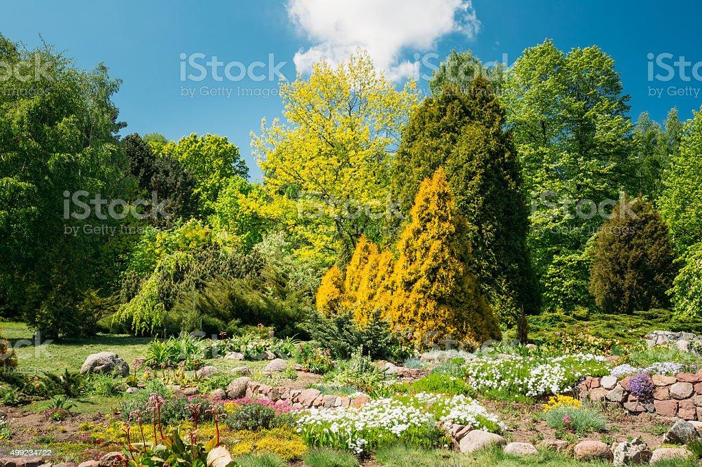 Photo libre de droit de Vert Arbres Et Buissons Dans Le Jardin ...