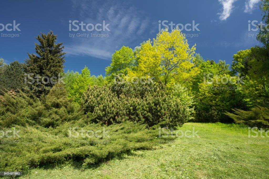 Photo libre de droit de Arbres Verts Et Arbustes Dans Le ...