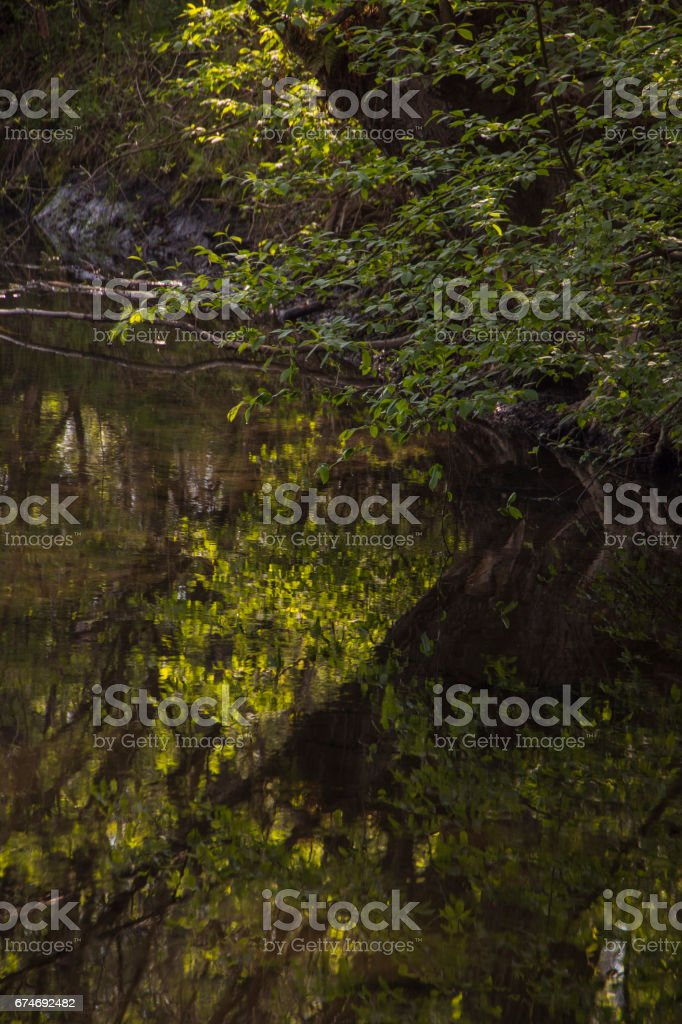 Green trees by the lake stock photo