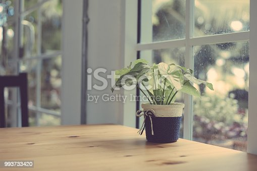 697868238 istock photo Green trees in a clay pot near the window, vintage color tone 993733420
