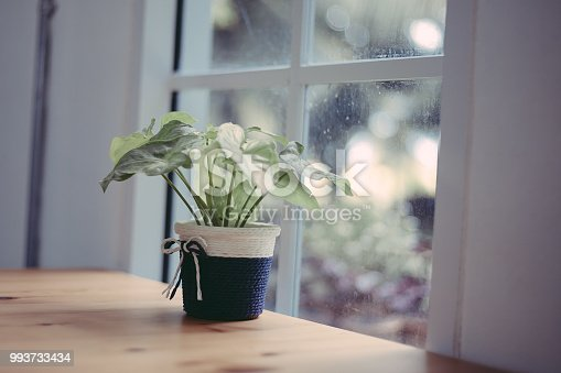 697868238 istock photo Green trees in a clay pot near the window, vintage color tone 993733434