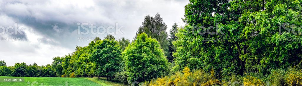Green trees in cloudy weather stock photo