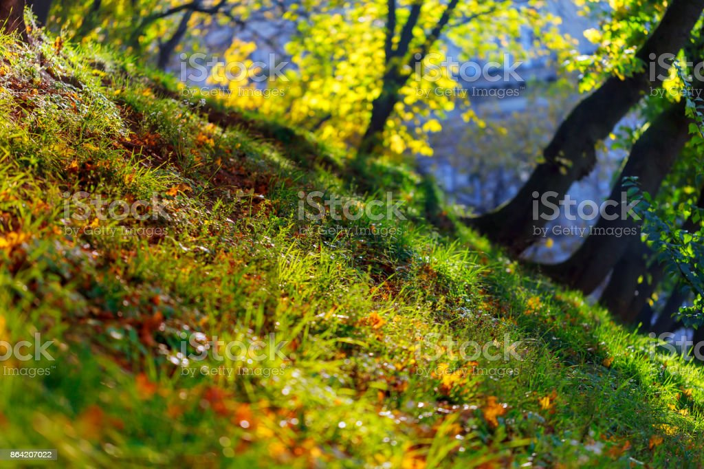 Green trees in park, a morning view backlight royalty-free stock photo