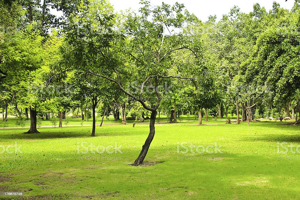 Green trees in park royalty-free stock photo
