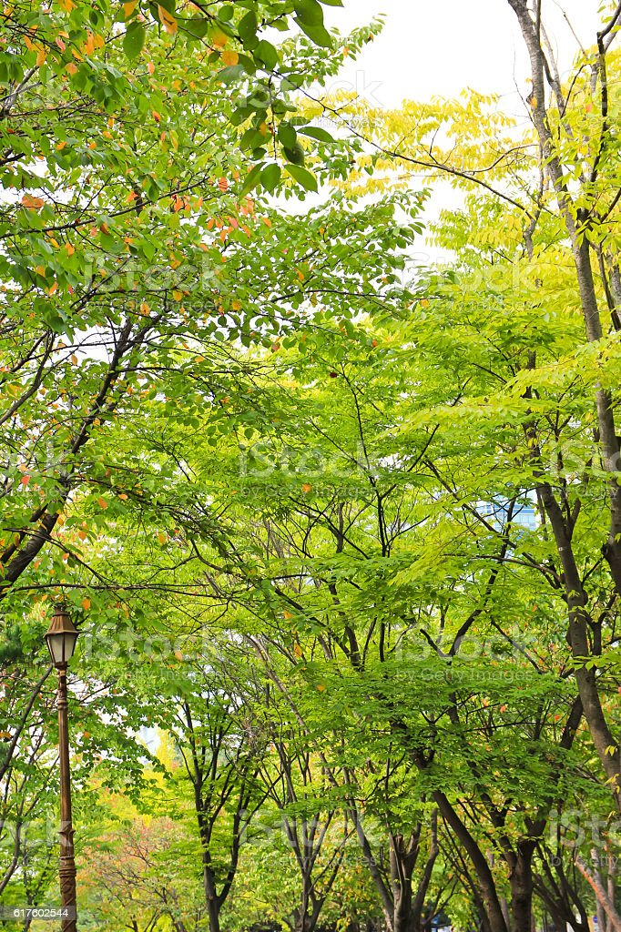 green trees in the park stock photo