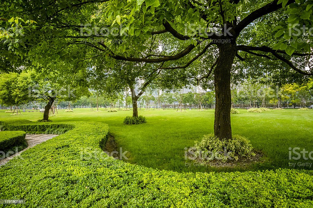 green trees stock photo