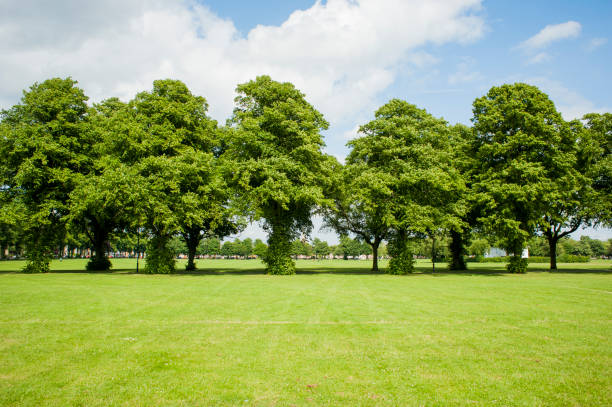 Green Trees Lush green trees in a line treelined stock pictures, royalty-free photos & images