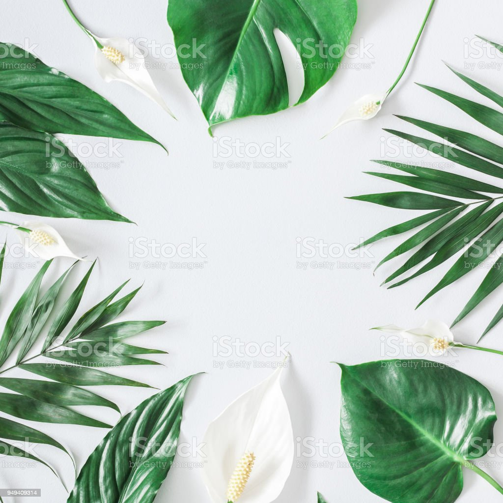 Summer tropical composition. Green tropical leaves and white flowers...