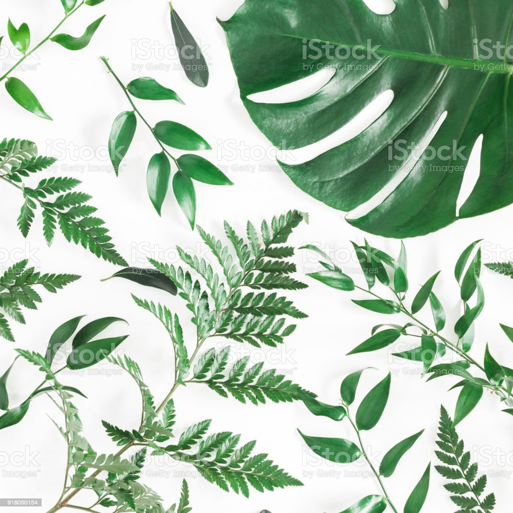 Green Tropical Leaves On White Background Flat Lay Top View Stock Photo Download Image Now Istock Download nature free stock photo tropical leaves free background. green tropical leaves on white background flat lay top view stock photo download image now istock