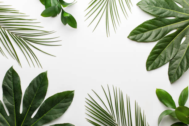 Green tropical leaves on white background. stock photo