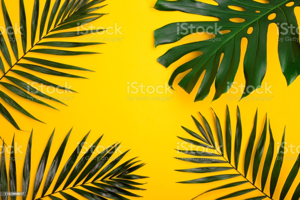 Green Tropical Leaves On Yellow Background Summer Creative Flat Lay Stock Photo Download Image Now Istock Ideal for any project that requires leaf, tropical, purple. https www istockphoto com photo green tropical leaves on yellow background summer creative flat lay gm1152869817 312936051
