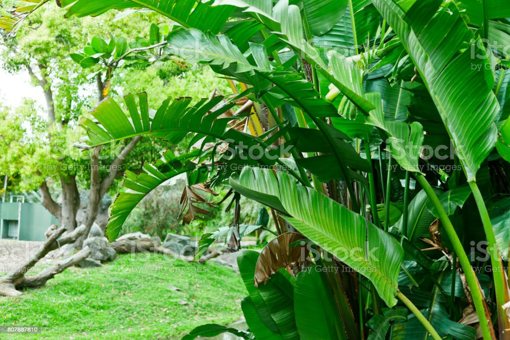 green tropical nature background stock photo