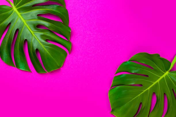 feuille de palmier tropical vert sur fond de couleur rose. style plat laïc minimal. aérien, vue, espace copie de dessus - motif tropical photos et images de collection