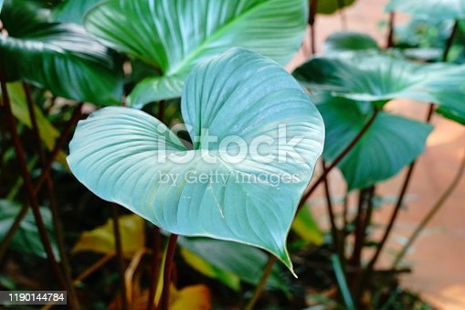 Green Leaves tropical texture