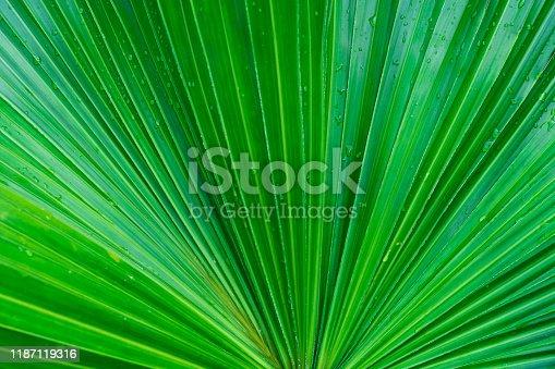 Green tropical plant leaf background