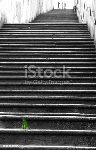 istock Green tuft of grass along the long ladders 463941985