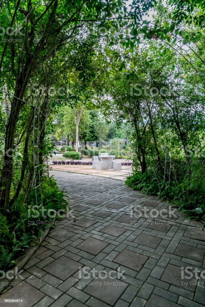 Green tunnel of plants royalty-free stock photo