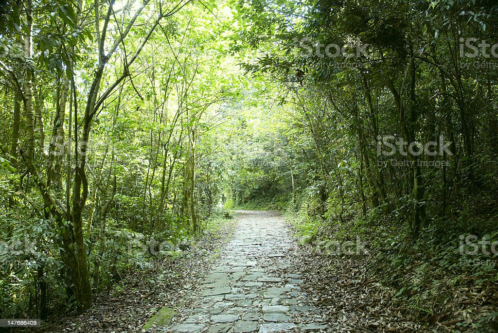 Green tunnel royalty-free stock photo