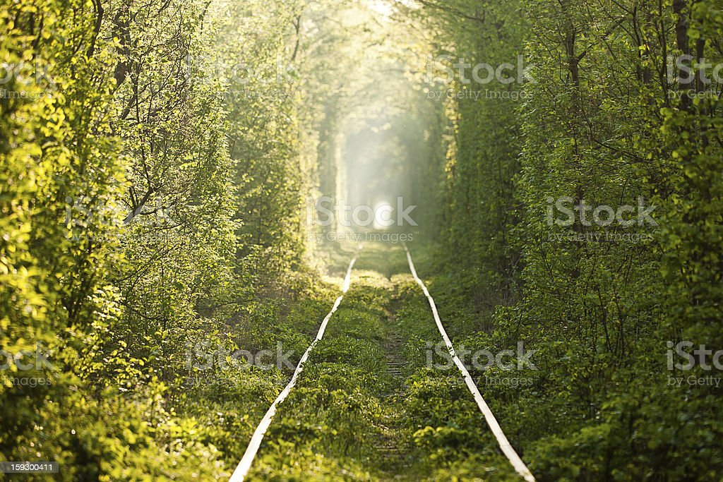 Green tunnel. stock photo