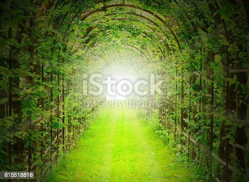 istock Green tunnel with sun rays. 615518816