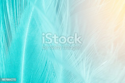 istock Green turquoise and blue color trends chicken feather texture background,Light orange 857664270