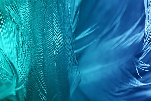 green turquoise and blue color trends chicken feather texture background - pfau bilder stock-fotos und bilder