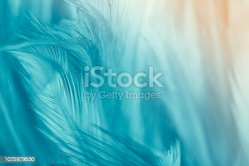 istock Green turquoise color trends chicken feather texture background,Light orange 1025929530