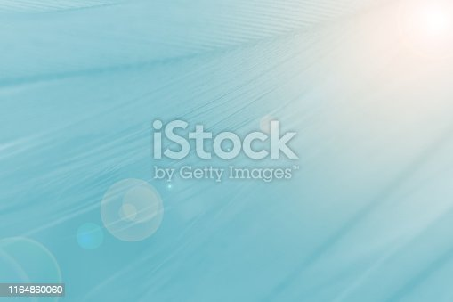 istock Green turquoise color trends chicken feather texture background,Light orange 1164860060