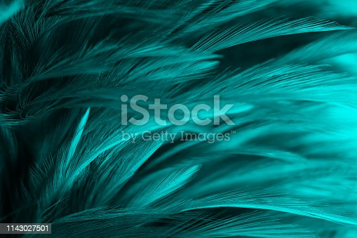 istock green turquoise vintage color trends chicken feather texture background 1143027501