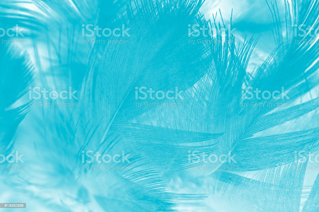 green turquoise vintage color trends chicken feather texture background – Foto