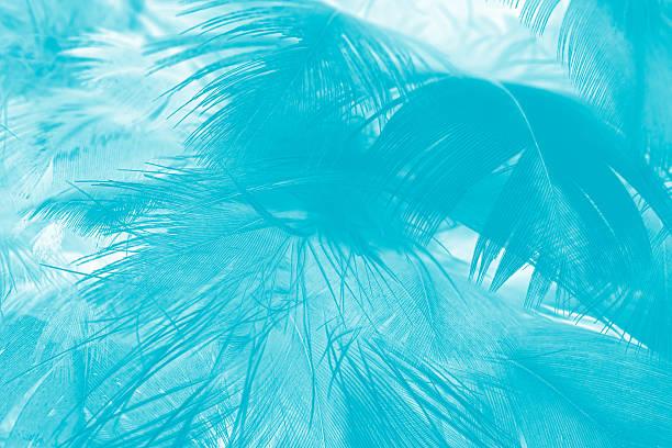 green turquoise vintage color trends chicken feather texture background - pfau bilder stock-fotos und bilder