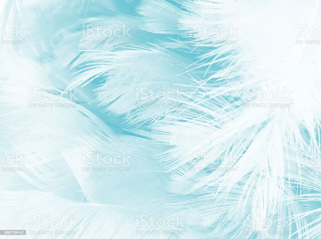 green turquoise vintage color trends chicken feather texture background stock photo