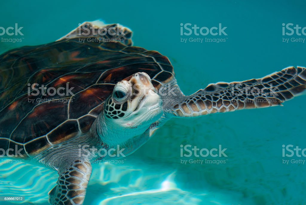 Green turtle stock photo