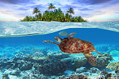Green turtle underwater at the tropical island