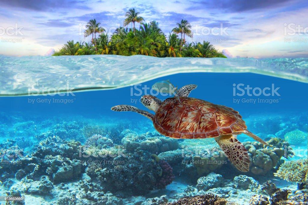 Green turtle underwater – zdjęcie
