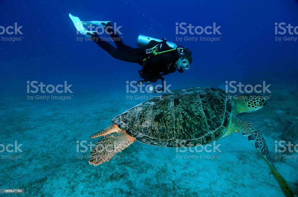 Green Turtle with Diver Underwater stock photo