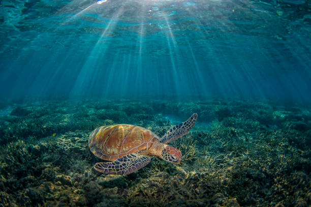 green turtle with sky - great barrier reef marine park stock pictures, royalty-free photos & images