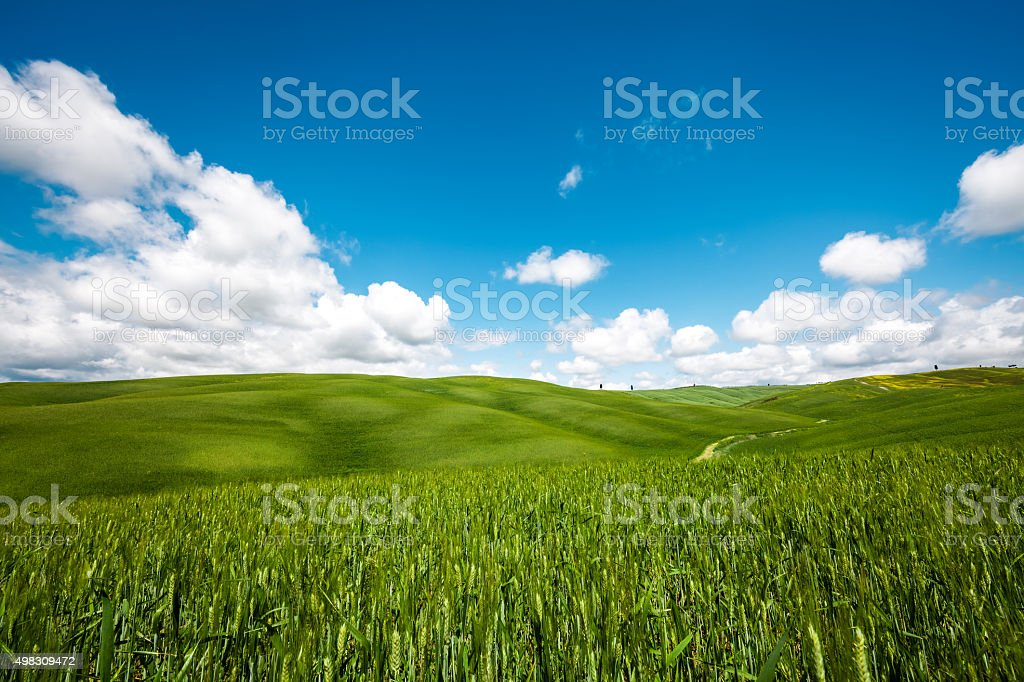Green Tuscany Field stock photo