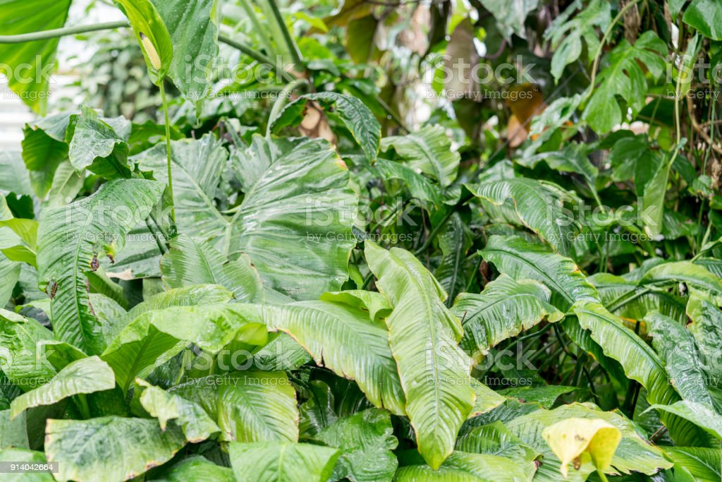 green undergrowth in the rainforest stock photo