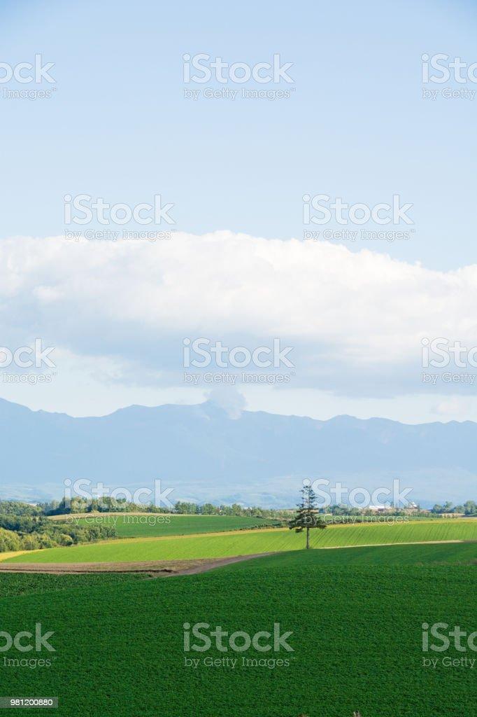 Green upland field in Biei stock photo