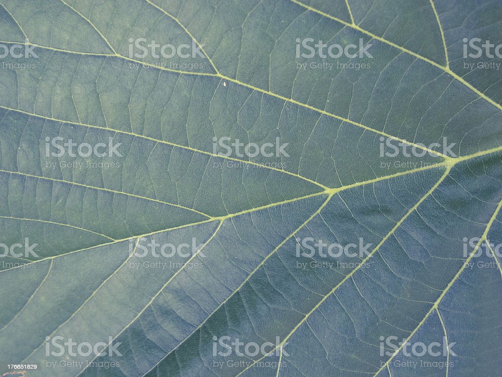 Green vegetal texture for background royalty-free stock photo