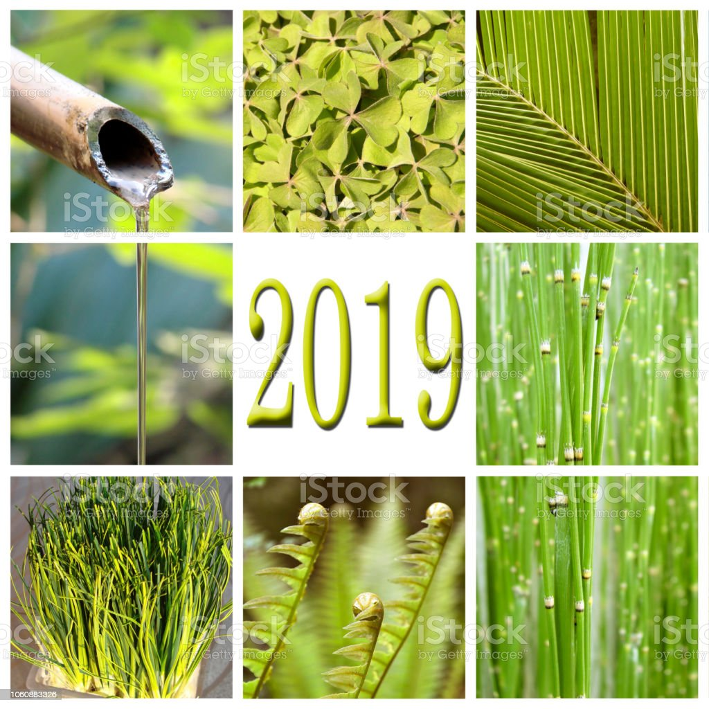 2019, green vegetation collage stock photo