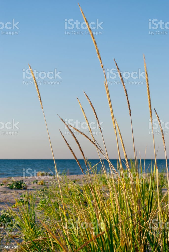 Green vegetation grass on a background of beach, sea, sky stock photo