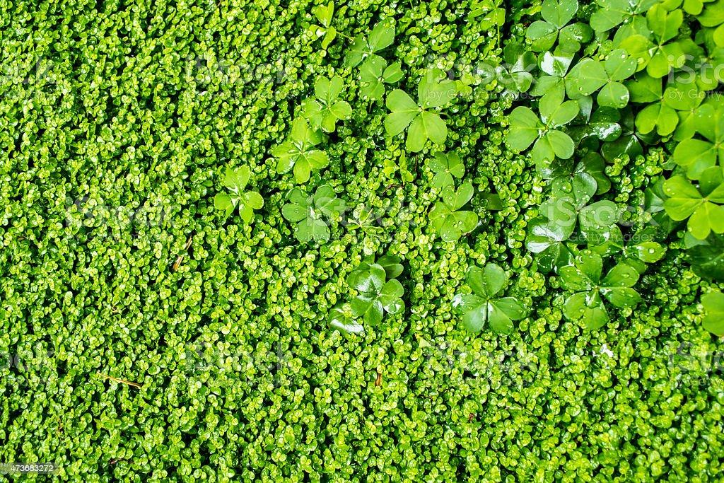 Green Vegetation Growth stock photo