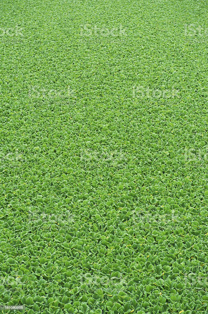 Green Vegetation royalty-free stock photo
