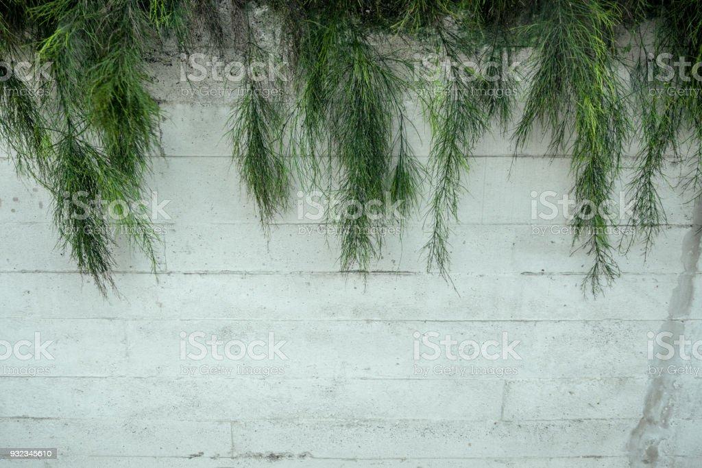 Photo libre de droit de Vert Jardin Vertical Avec Fond De ...