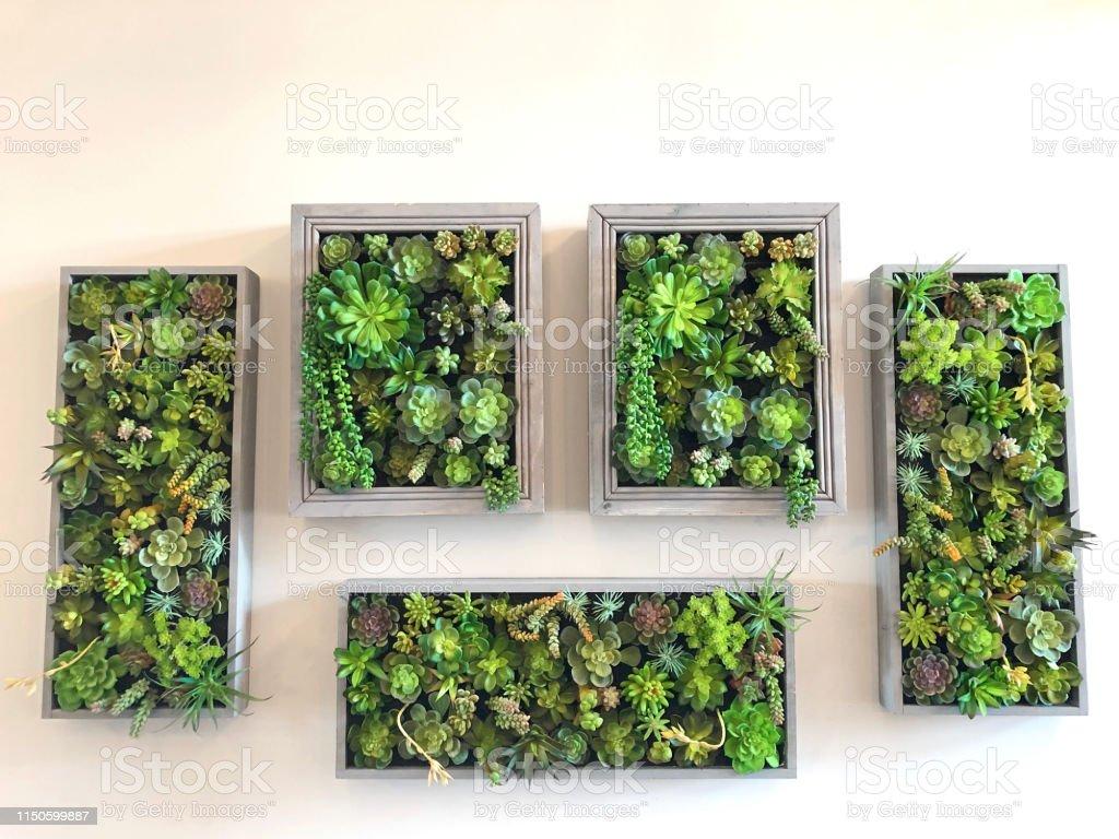 Mur Vegetal Plante Grasse photo libre de droit de mur de jardin de plante verticale