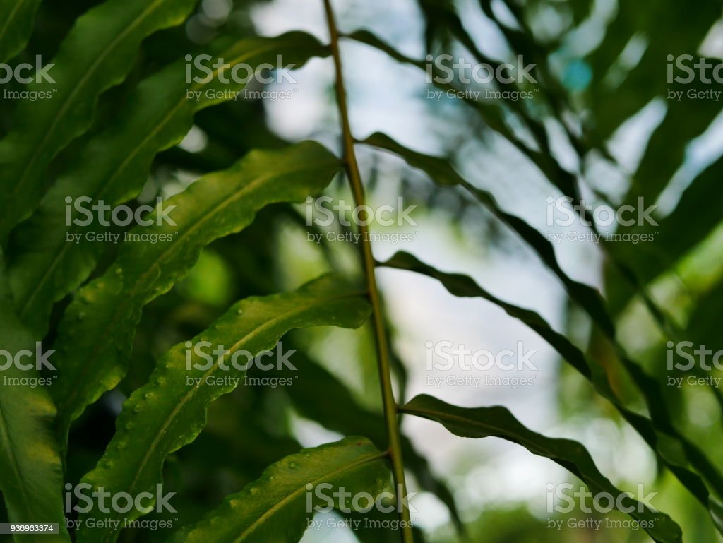 Green vine, fern leaves crowding on hanging coconut shell in a tropical garden stock photo