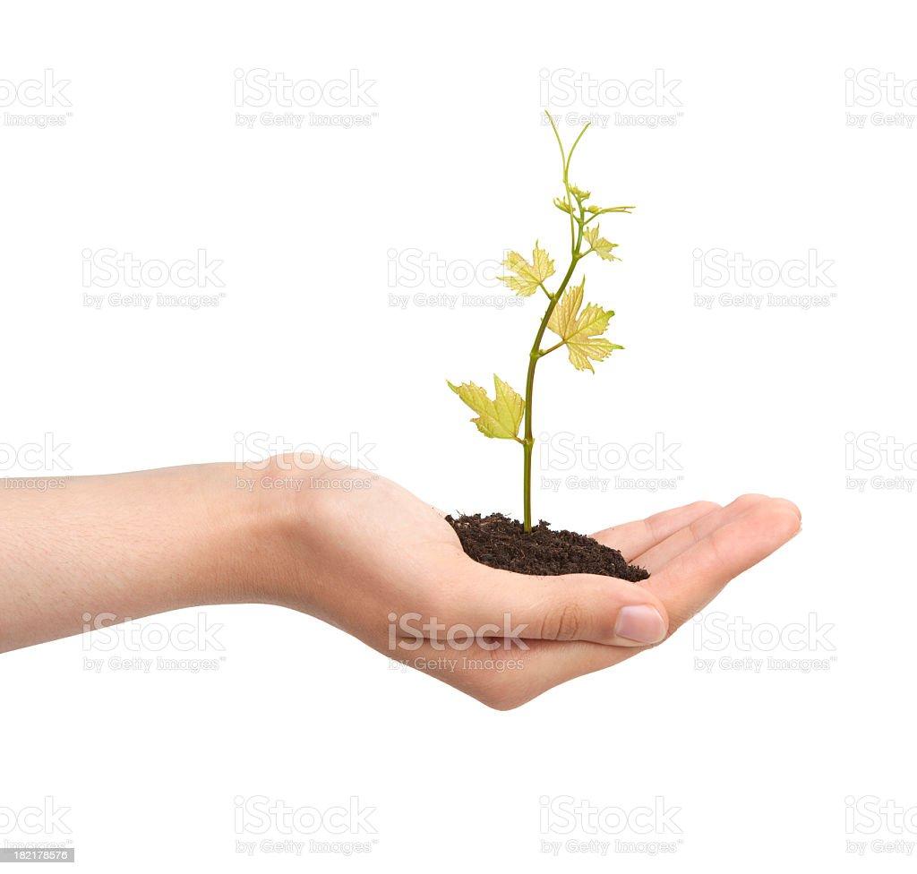green vine stock photo